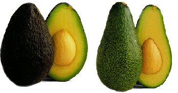 Avocado nutrition information and benefits